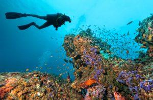 חופשת צלילה