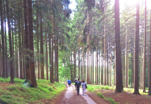 סדנת ניה ביער צ'כי