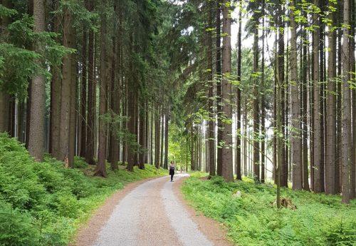 דרך הרוח – סדנת שחרור האמת הפנימית