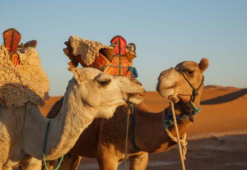 מסע מופלא של יוגה, פילאטיס ותרבות במרוקו